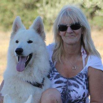 weißen schweizer schäferhund